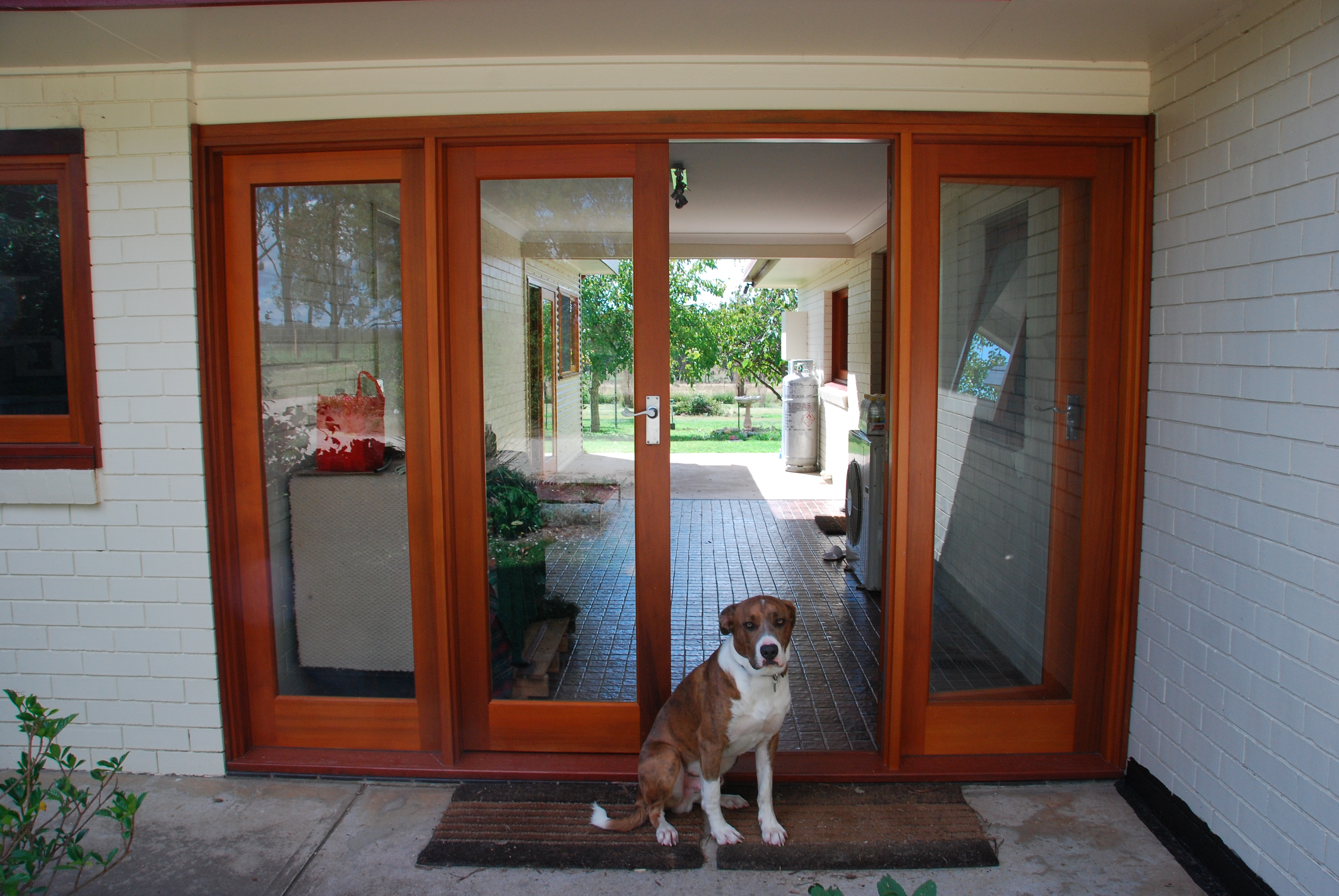 2592 #6F3019 French Doors With Fixed Door Sidelights And Beautiful Dog wallpaper Doors And Sidelights 40353872